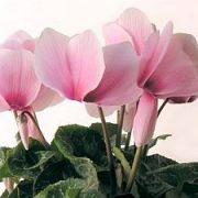 Augalai mūsų gyvenime