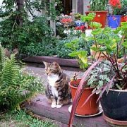 Katėms draugiški kambariniai augalai