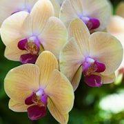 Orchidėjos šalia jūsų