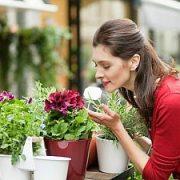 Kaip išsirinkti kambarinius augalus?