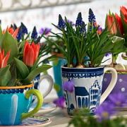 Kambarinėms gėlėms tinkamiausia oro temperatūra