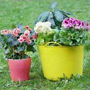 Šviežias oras būtinas ir gėlėms
