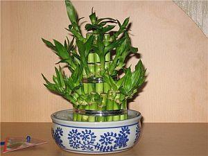 bambukas2