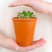 Kambarinių augalų priežiūra žiemą