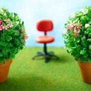 Kambariniai augalai gali pagerinti nuotaiką