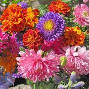 Rudens gėlės