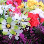 Kuo pavojingos dirbtinės gėlės kapavietėje?